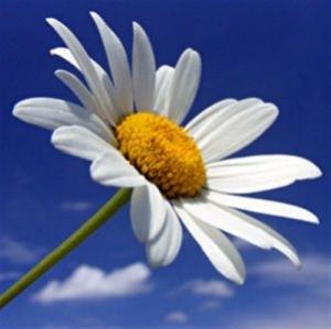 Wiesenblume 6.80.-