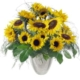Sonnenblumen mit neuer Vase
