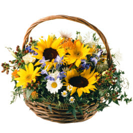 Sommer Korb mit Sonnenblumen, Mädchenauge, Margriten